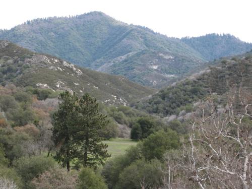 2-pine-clearing.jpg